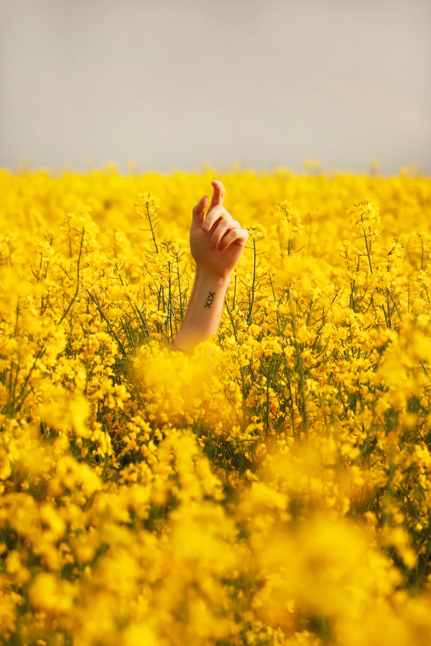 human hand between yellow petaled flower field